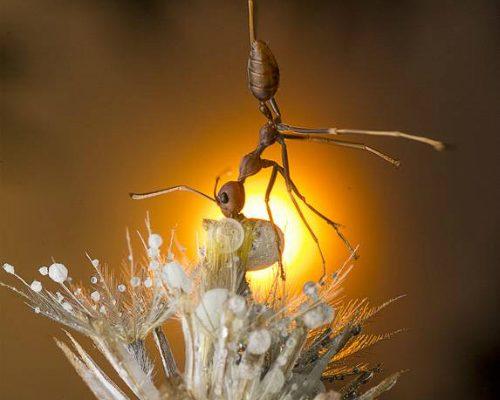 Lim-Choo-How-macro-fotografia-insetti-areashootworld